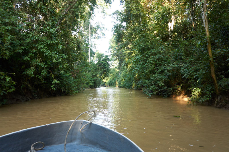 Beauty In Nature Boat Day Forest Growth Jungle Jungle River Nature No People Outdoors River Scenics Tranquility Tree Water