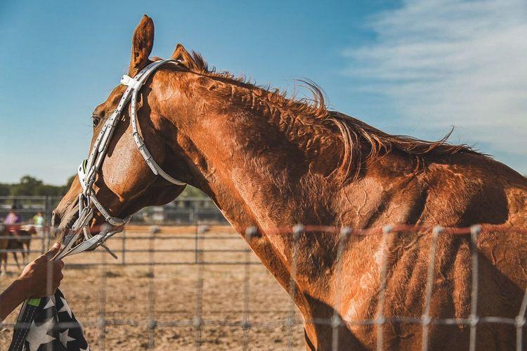 Horse Livestock