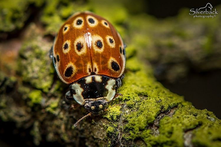 Insect Macro Photography Nature Photograhy Close-up Ladybug Ladybug🐞 Ladybugs Photography Ladybugmacro Macrophotography