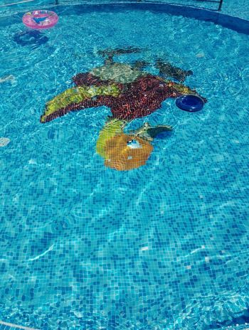 Cute duck Duck Swimming Pool Water UnderSea Backgrounds Multi Colored Sea Beach Swimming Pool Blue Close-up