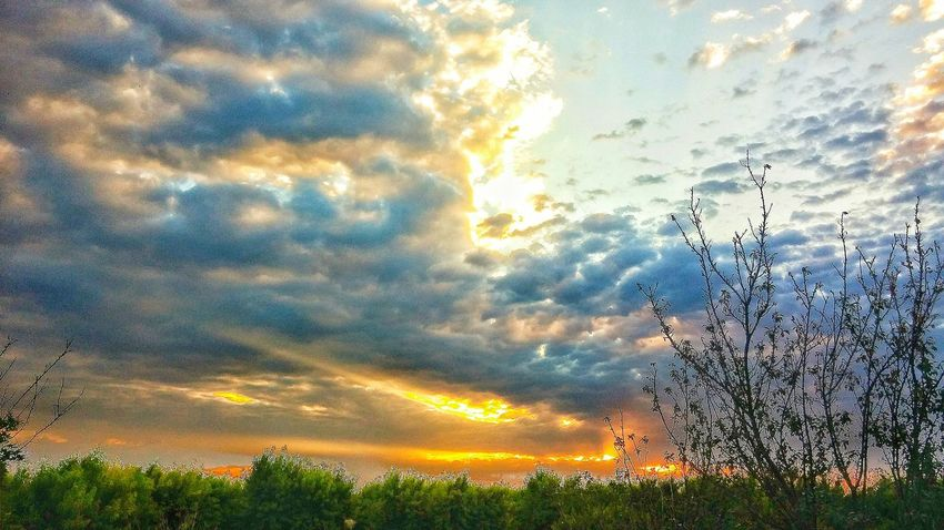 Hanging Out Check This Out Taking Photos Good Morning Norcal Sunrise Sunrise Clouds And Sky