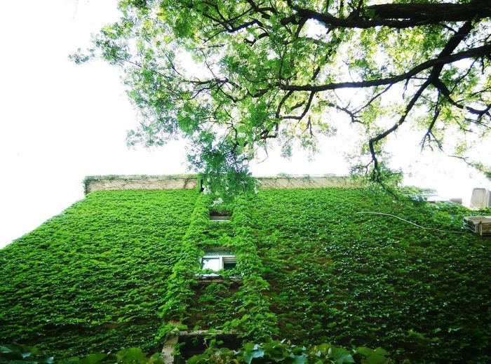 Art Is Everywhere Green Color Tree Growth Nature Outdoors Beauty In Nature Sreetphotographer City
