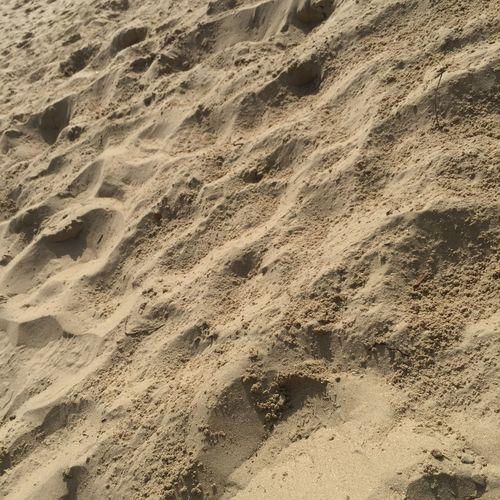 Sand Land No