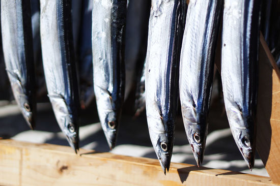 Japan Mackerel fish Fish Fish Market Fishing Industry Food Food And Drink For Sale Hanging Mackerel Mackerel Fish No People Raw Food Seafood