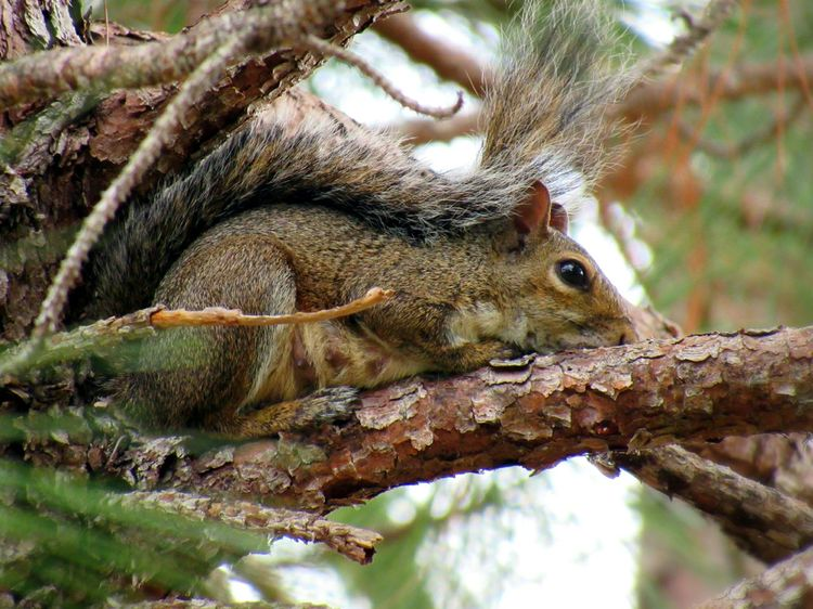 Animals Squirrel New Mother Pinetree Nature Still Life Photography