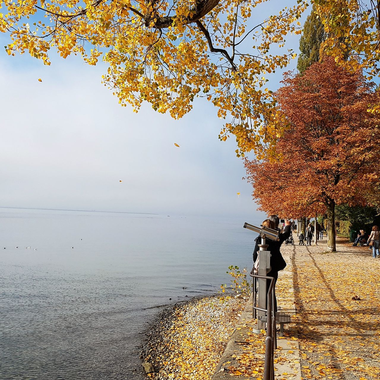 autumn, change, nature, beauty in nature, tree, leaf, water, scenics, tranquility, tranquil scene, outdoors, day, photography themes, sea, branch, no people, horizon over water, sky