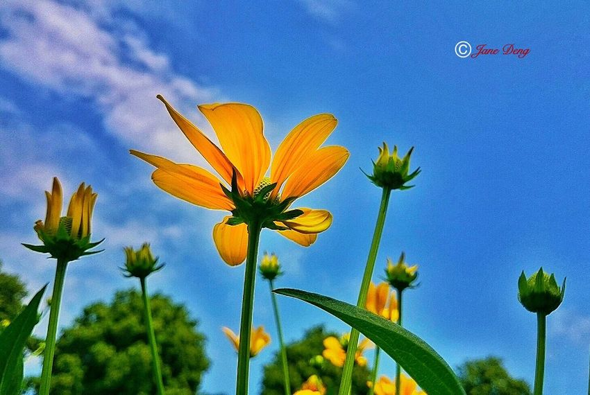 43 Golden Moments Taking Photos Check This Out Hello World Relaxing Enjoying Life Fine Art Beauty Nature Nature For You ;-) EyeEm Gallery The Week Of Eyeem Showcase July From My Point Of View Welcomeweekly Getting Inspired EyeEm Best Shots Atmosphere Caught The Moment Learn & Shoot: Leading Lines Sky And Clouds Sky Nature_collection Flowers, Nature And Beauty Flowers,Plants & Garden