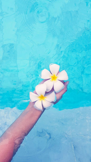 High angle view of hand holding blue water lily in swimming pool
