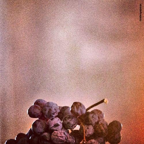 Amarone , Wine , Vineyard , Fruttaia , Winemaker , Valpolicella , www.produzionepropria.com, Stefanogasparato , Vino , Verona ,