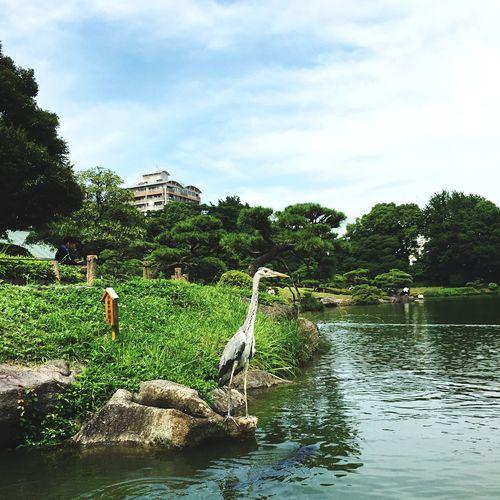 Animal Love Bird Watching Birds Beauty In Nature Japan