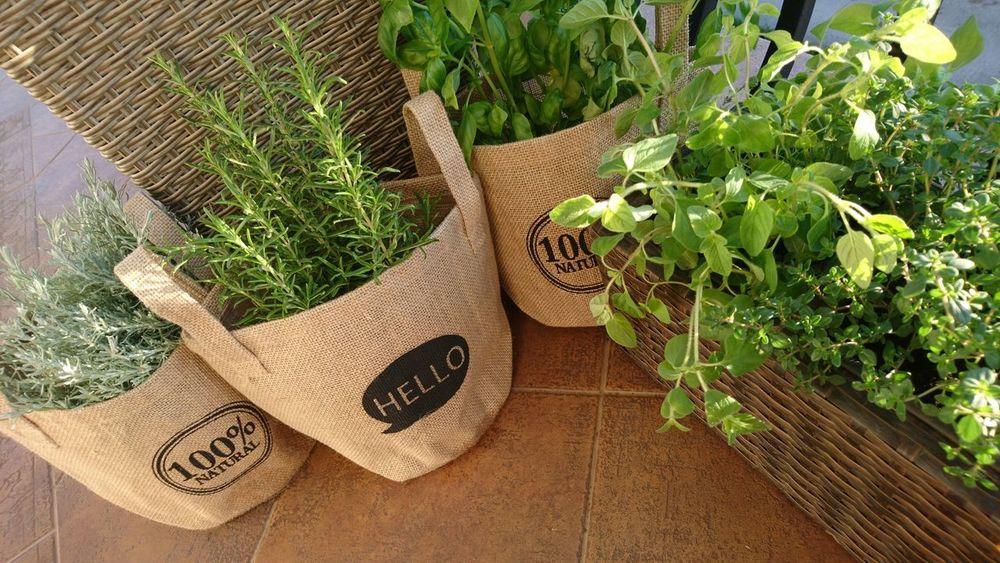 Herbs Nature My Garden Kitchen Basil Rosemary Oregano