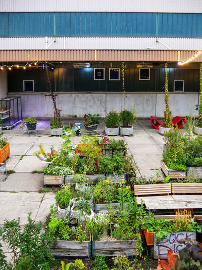 #urbanana: The Urban Playground Urban Gardening Architecture Beauty In Nature Building Exterior Built Structure City Day Flower Flower Pot Flowering Plant Freshness Front Or Back Yard Gardening Green Color Growth High Angle View Nature No People Outdoors Plant Potted Plant Roof Streetphotography Vegetable
