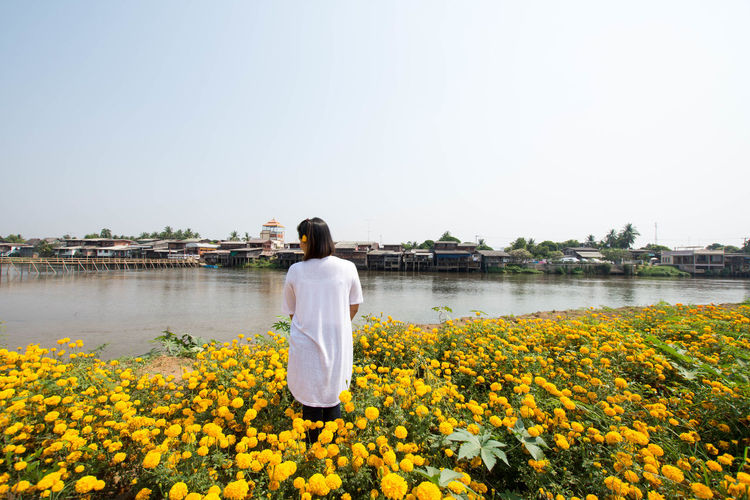Rear view of woman standing amidst marigolds by river against clear sky