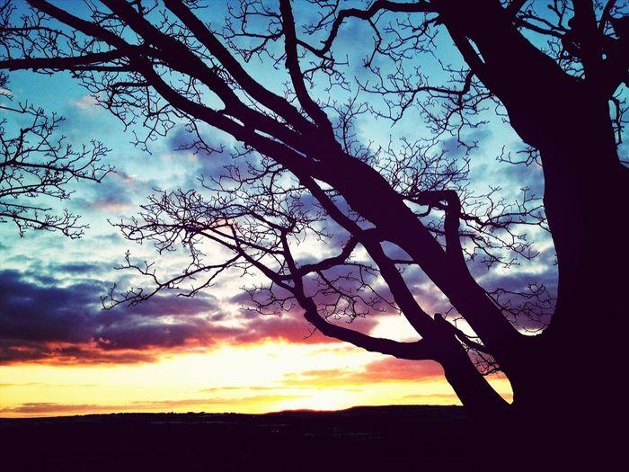 Sunset Tree Gimme The Light