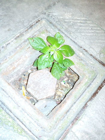 Leaf Plant Growth No People Green Color Dirt Path Ashes To Ashes Freedom Strugle For Survival Fight The Power Thoughts & Quotes Be One With Mother Earth BeDifferent <33  Beginning Of The Night