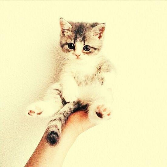 Catsaremylove