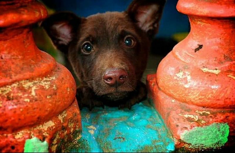 Goodmorning EyeEm  Broshot Arfarrrf! Hello:) DoggieAwaw