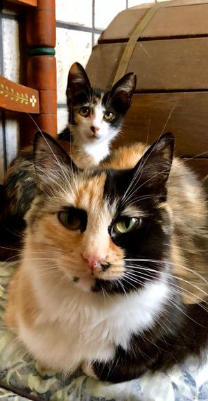 Mush y Agatha❤️ The Week on EyeEm EyeEm Best Shots Domestic Cat Pets Domestic Animals Animal Themes Feline Mammal Cat Looking At Camera Portrait Indoors  One Animal Sitting Close-up No People Day Whisker