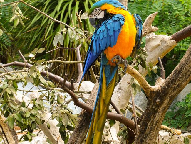 Parrot Parrot Colors Scarlet Macaw Tropical Bird Parakeet Rainforest Tropical Rainforest