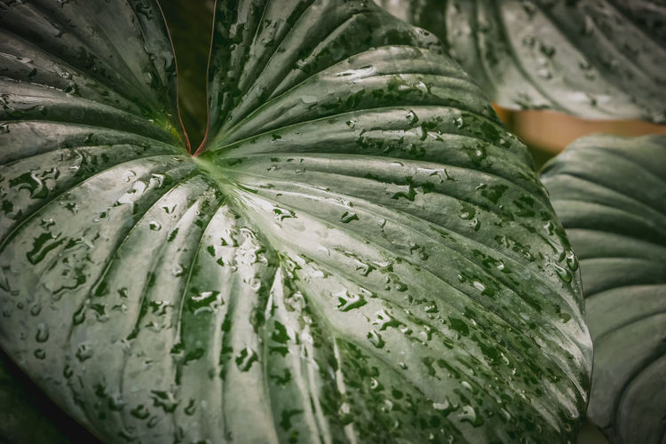 Close-up of water drops on green leaf