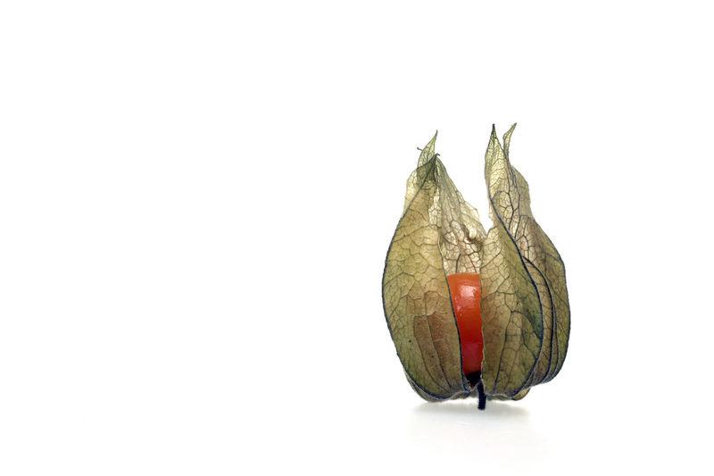 physalis Exotic Fruit Fruit Physalis Physalis Fruit Physalis Peruviana Physallis Red Fruits Ripe Fruit Ripe Physalis