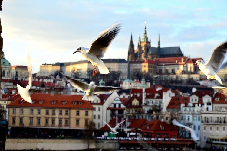 Flying Bird Architecture Sky City Outdoors Prague Czech Republic