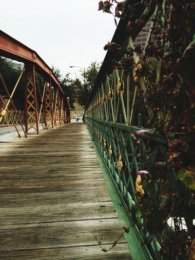 🏙 Downtown Satx Wooded Path Hello World Check This Out Nature City Enjoying Life San Antonio Riverwalk  Texas