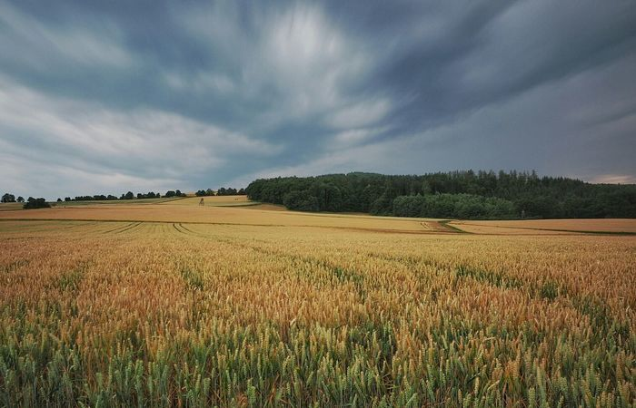 Landscape Taunus The Great Outdoors - 2015 EyeEm Awards Nature_collection Germany