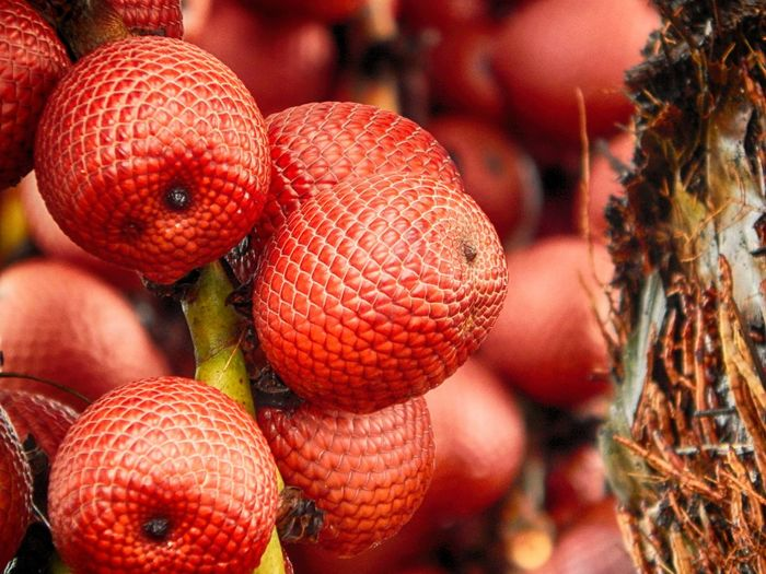 Abondance Buriti Close-up Fruit Large Group Of Objects Nature Red Red Fruits