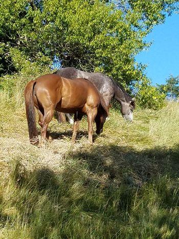 Animal Themes Domestic Animals Horses Horses Eating Grass On A Hill Horses Eating Grass Horseloverz Hores Love Beautiful Horses