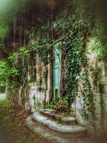 From wealth to decay Abandoned Buildings Abandoned Places Architecture Day Decay Downfall Green Growth Ivy Lumicar Nature Nature On Your Doorstep No People Outdoors Over Time Plant Ruined Tree Dreamlike Tranquility Adventure The Secret Spaces