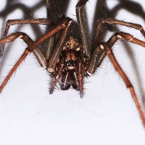 Spider One Animal Spider Animal Themes Animals In The Wild Animal Wildlife Insect Jumping Spider Outdoors No People Day Close-up Nature