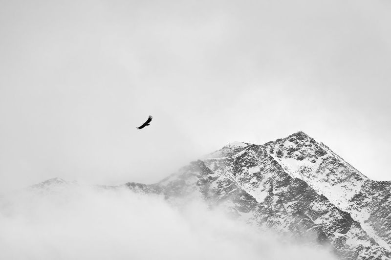 Snow mountain, bird, sky, flying China Landscape Mountain Sky Beauty In Nature Scenics - Nature No People Nature Day Snow Snow Mountain Fog Cloud - Sky Cloud Bird Travel Freedom Flying Vertebrate Animal Themes Animal Animals In The Wild Animal Wildlife One Animal Low Angle View Tranquility Mountain Range Snowcapped Mountain
