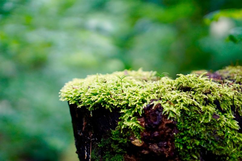 Close-up of moss growing on plant