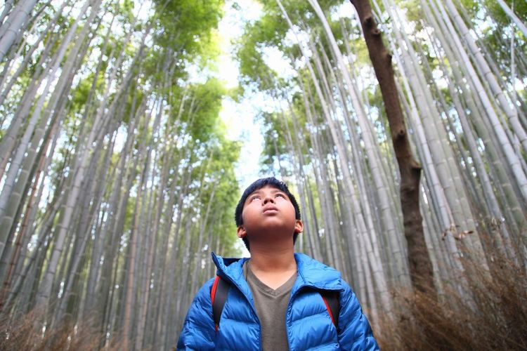Low Angle View Of Boy Looking Up In Forest