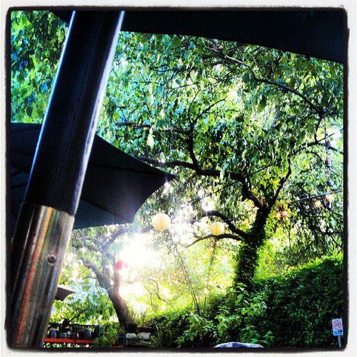 Openmic Coffeegarden