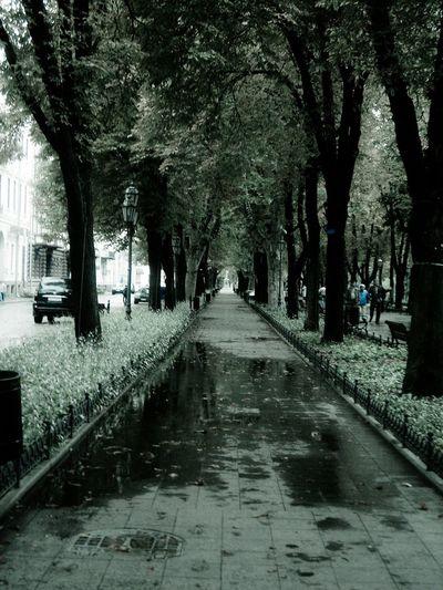 Monochrome Aquatic Life Walking Around The City  Walking In The Rain Treescape