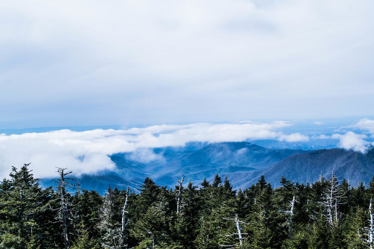 Scenic view of forest and mountains against cloudy sky