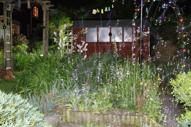 #Bubbles Architecture Building Exterior Flower Growth Illuminated Nature Night No People Outdoors Plant