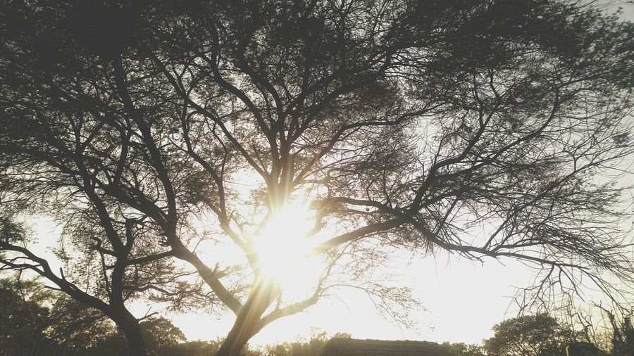 Sunlight Low Angle View No People Nature Sky Sunbeam Tree Growth Outdoors Beauty In Nature Sun Close-up Backgrounds Day Blackandwhite Photography Full Frame NewEyeEmPhotographer Like4like EyeEmNewHere NewHere ✌🏽️😄 Well-dressed Spotted Love Myth Nature