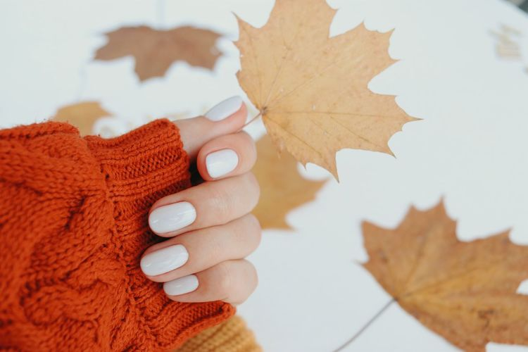 Close-up of hand holding maple leaves