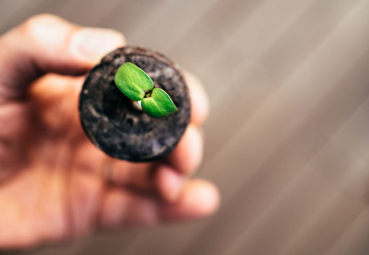 Cropped Hand Of Person Holding Seedling