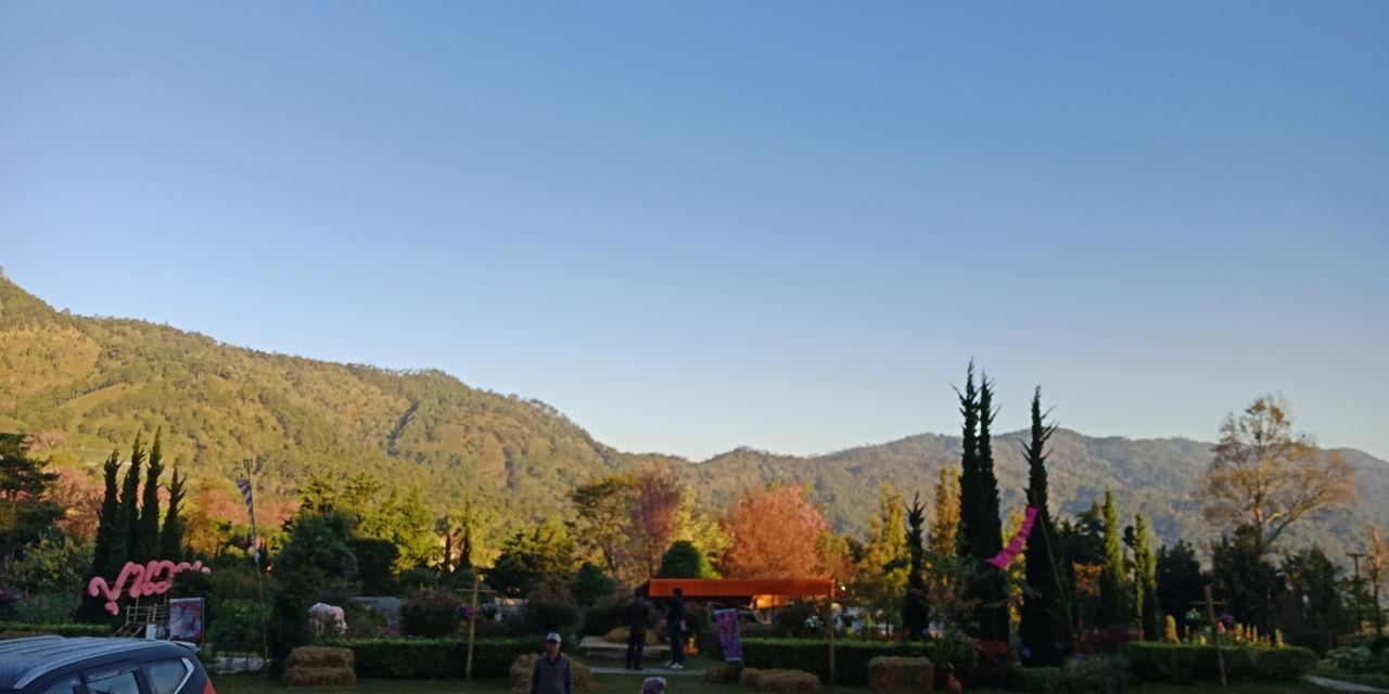 Mountain Tree Scenics Landscape Autumn Nature Beauty In Nature