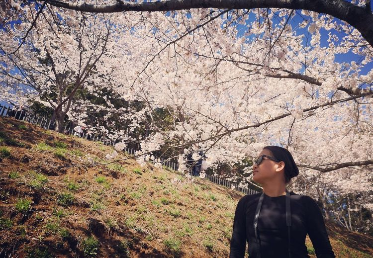 Young woman looking away while standing by cherry tree
