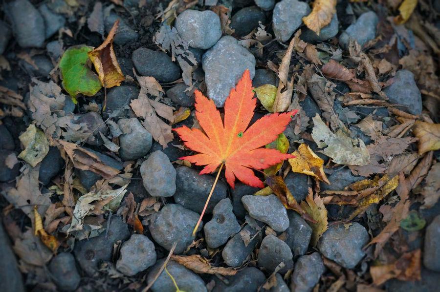 2013 Autumn Colors Hallasan Hallasan Mountain Jeju JEJU ISLAND  Leaf Leaves Maple Maple Leaf Nature Outdoors カンナ山 チェジュ島 ハルラ山 済州島 紅葉 韓国 단풍 한라산