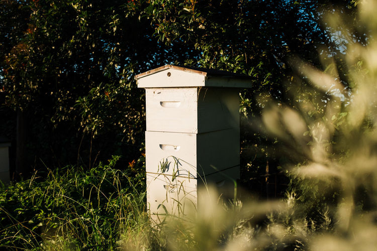 Bee Hive in