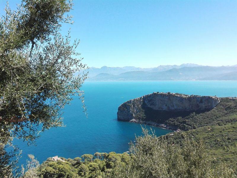 Bejaia Algeria Mediterranean Sea Olive Tree Blue Sky