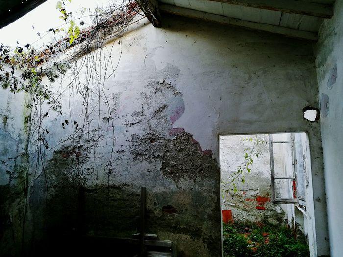 Window Drop No People Damaged Destruction Tree Indoors  Day Water Nature Urbanphotography Desolate Scene Abandoned House