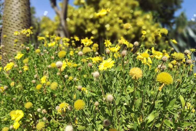 Nature Flower Growth Plant Beauty In Nature Outdoors Meadow Grass Yellow Summer Freshness Wildflower Day Green Color Sunlight Tranquility Field Tranquil Scene No People Scenics