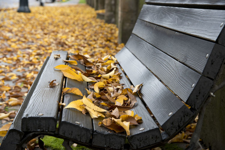 High Angle View Of Autumn Leaves Fallen On Bench
